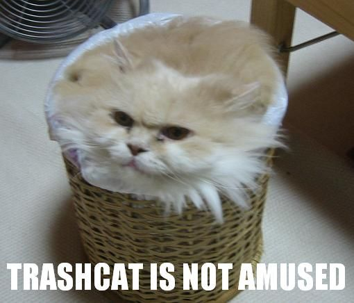 The Outlaw Topic. Also Kittens! - Page 3 1161382102-trash