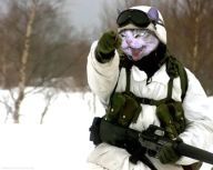 1162399691-catsoldier