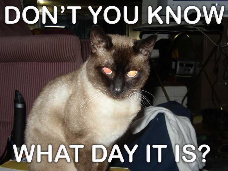 Funny Meme Yay : Its caturday yay! topic in the 'off topic classics' forum kvr