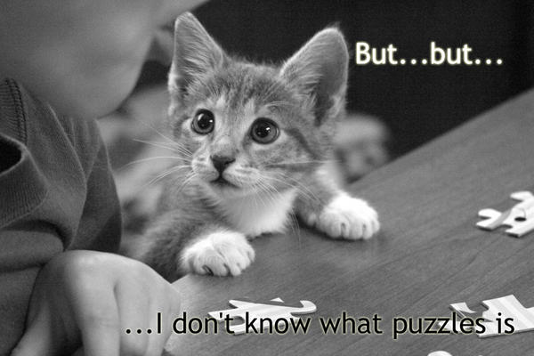1181592539-20255puzzled-kitty.jpg