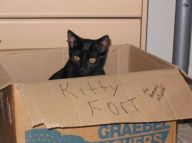 1193000424-Kitty_Fort