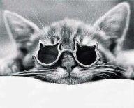 1198942621-cat_with_glasses