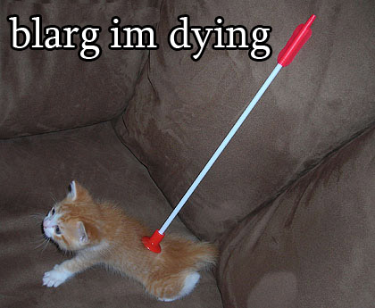 All self respecting Internet sites post cat images with captions: