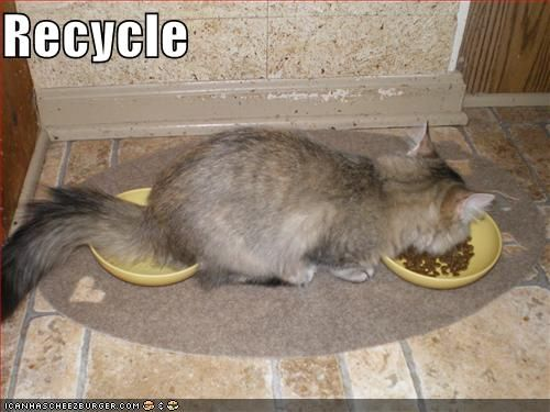 http://www.acc.umu.se/~zqad/cats/1204982164-funny-pictures-cat-recycles-food.b.jpg